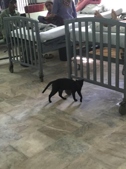JPMC-cats-438x584