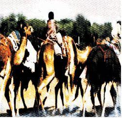 camel-2-jul03